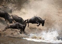 Tanzania Safari Animals and Where to Find Them